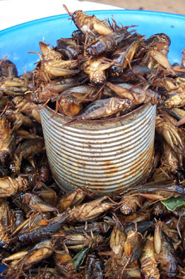 Insetti fritti - Fried insects